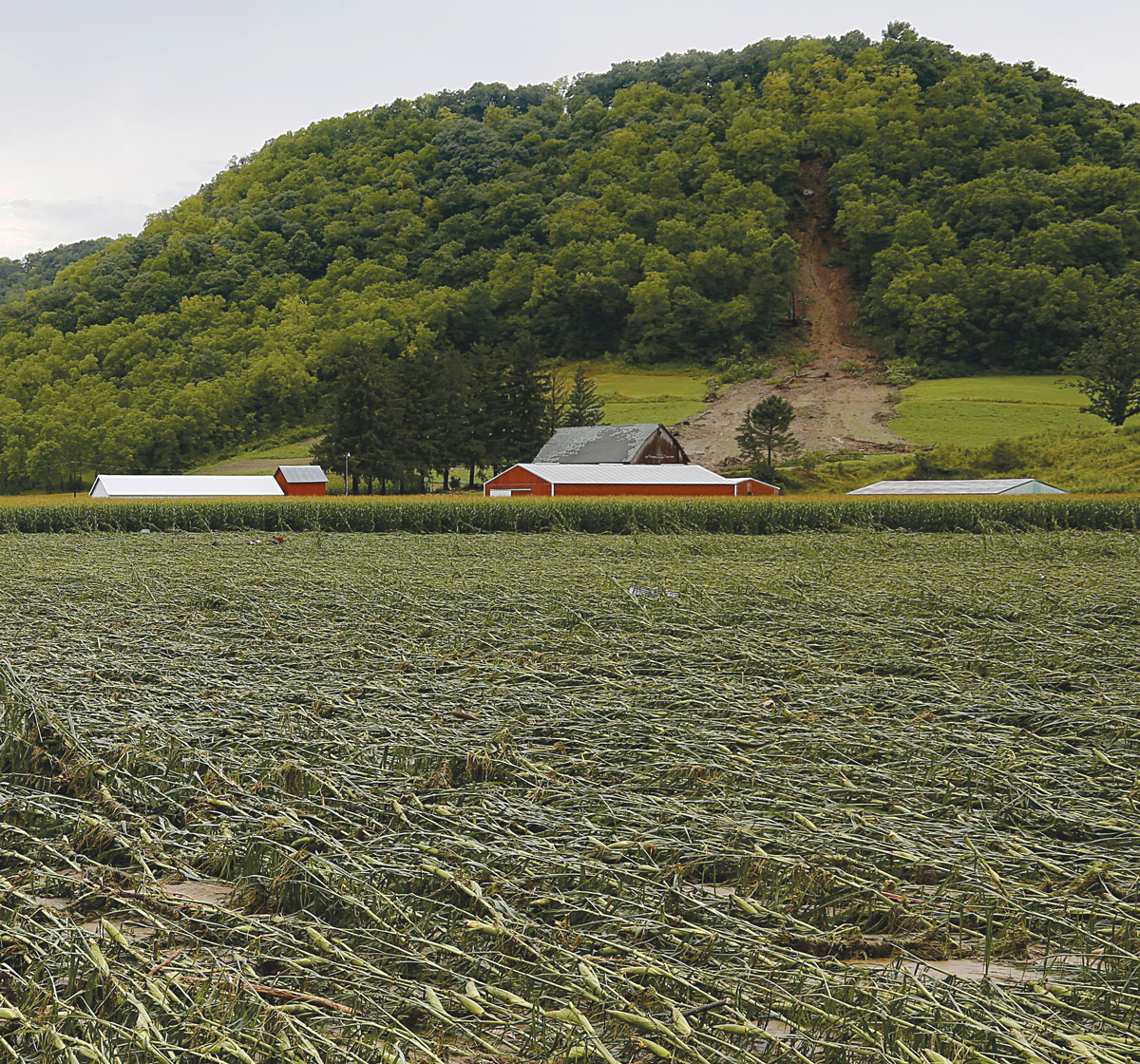 Driftless hillsides that have held the land in place for thousands of years gave way in numerous locations between August 27 and 28, 2018. Photo by Jon Lee.