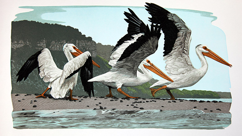 Gaylord Schanilec, Pelecanus erythrorhynchos, wood engraving, 2010. From the book Lac Des Pleurs, Midnight Paper Sales, 2015.