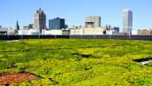 The green roof on MMSD's headquarters in downtown Milwaukee