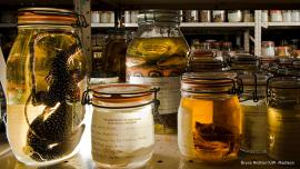 Specimens from UW-Madison Zoological Museum. Photo: Bryce Richter