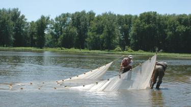 John D. Lyons and his son, Eric, seining a Mississippi River backwater near Cassville for Asian carp in 2007.