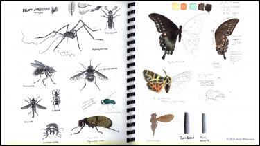 Illustration notebook by course instructor Jacki Whisenant